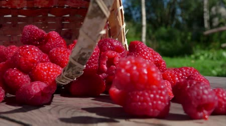 framboesas : Birch basket full of juicy red raspberries is falling on a wooden table. Berries rolling on the wooden surface on a bright sunny day