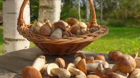 proutěný : Wicker basket full of delicious freshly picked mushrooms placed on a wooden table next to mushroom harvest