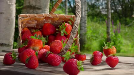 bűbájos : Birch basket full of juicy red strawberries is falling on the wooden table. Big strawberries rolling on the wooden surface on a bright sunny day Stock mozgókép