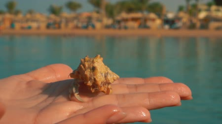 muszla : Hermit crab crawls on the palm on a background of blue sea