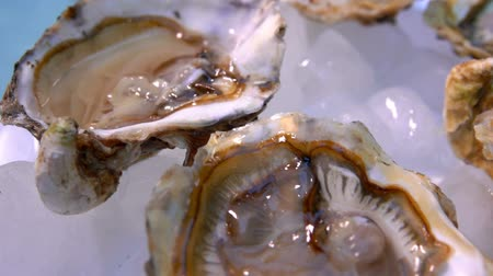 molusco : Very close up of an open oysters on a white plate with ice