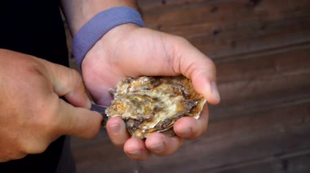 osztriga : Male hands open fresh oyster with a special oyster knife