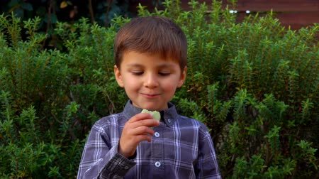 миндальное печенье : Cute little boy eats a traditional french almond biscuit cookie macaroon outdoors