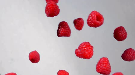 black raspberry : Red juicy raspberries falling on a white background in slow motion Stock Footage