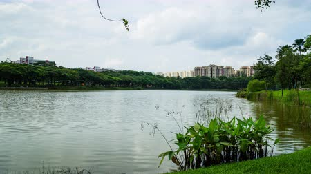 waterways : Beautiful lake view of Punggol Park in Singapore, garden side of river, Punggol Park with blue sky and moving cloud time lapse
