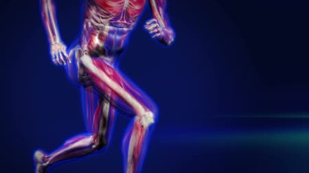 kolano : X-Ray man running, showing muscles and bones.