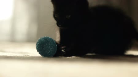 kotki : A black kitten plays with a blue ball.  Wideo