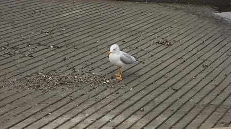 annoyance : a seagull screams when a voice interrupts its meal