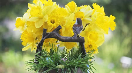 koszyk wielkanocny : chickadee and Easter basket with daffodils in the background Wideo