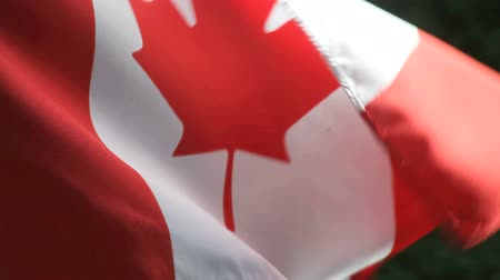 kanadai : a Canadian flag ripples and waves in the wind