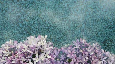 nedvesség : lavender-colored flowers float on a patterned ceramic background