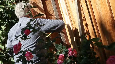 opravář : Homeowner building a trellis for roses
