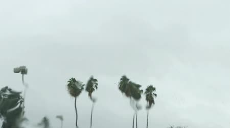 nedvesség : Birds flying near palm trees, images distorted by rain on a windshield