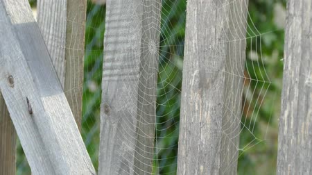 The spiderweb on the fence