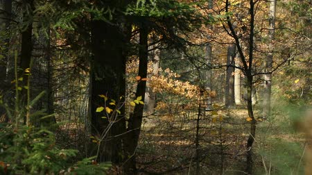 Autumn in the park. Stok Video