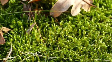 Green moss and yellow leaves.
