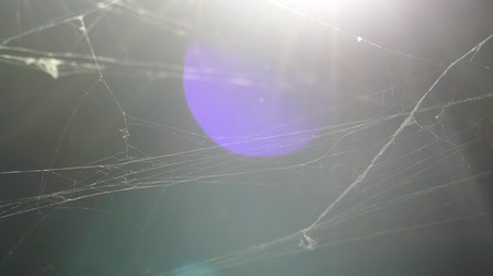 fobi : The spider web. The cobweb in the attic in the old house. The old cobweb is swaying. Stok Video