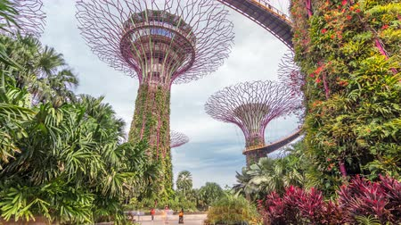 cingapura : Supertrees at Gardens by the Bay timelapse hyperlapse.