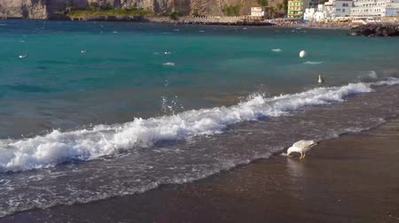 amalfi : seaguls walking at the beach of Meta di Sorrento at summer, southern Italy