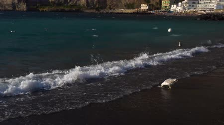 neapol : seaguls enjoying sea at the beach of Meta di Sorrento at summer, southern Italy