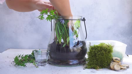 nedvdús : mason jar with plants inside, indoor gardening Do It Yourself, planting greenery