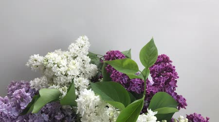 Showing fresh lilac flowers on white background with copy space