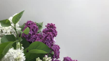 Bunch of fresh lilac flowers shaking on wind with copy space