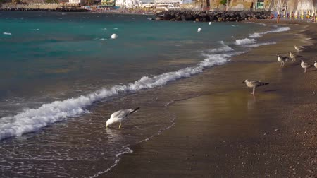 amalfi coast : seaguls enjoyng the beach of Meta di Sorrento at summer, southern Italy