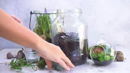 mason jar with plants inside, indoor gardening Do It Yourself, someones hands planting succulents, timelaps
