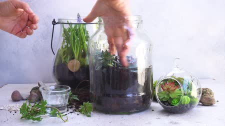 mason jar with plants inside, indoor gardening Do It Yourself, someones hands watering plants