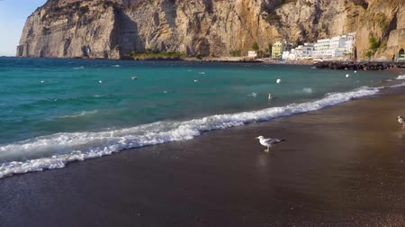 seaguls walking at the beach of Meta di Sorrento at summer, southern Italy