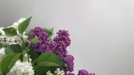 Bunch of fresh lilac flowers with copy space
