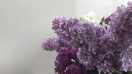 Bunch of fresh violet lilac flowers close up Стоковые видеозаписи