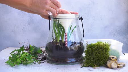 mason jar with plants inside, indoor gardening Do It Yourself, someone watering plants Стоковые видеозаписи