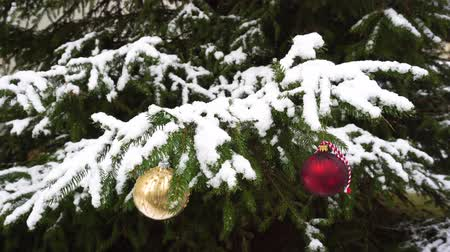 Christmas red and golden decoration hanging on evergreen tree with falling snow Stok Video