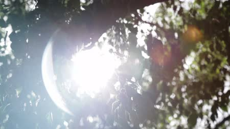 raios solares : sun shining on a hot and sunny day in South of France Stock Footage