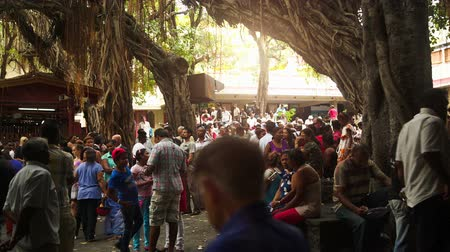 horserace : groups of people wait for the next horserace at the mauritian turf club. the sun is shining through the old trees and you can buy refreshing drinks and greese food while you wait.