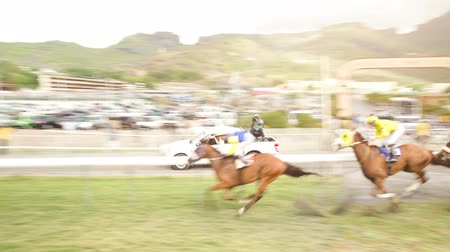 sampiyonlar : A group of horses compete at the horserace at the mauritian turf club in port louis. A van with a camera operator is filming the sport scene and driving next to the horses. Stok Video