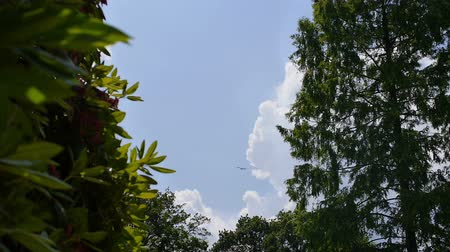 брезент : Between a bush and a big tree a plane is flying by on a sunny day.