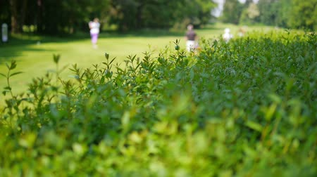 kurs : Close up of a green bush at a golf course with golf player in the blurred background.