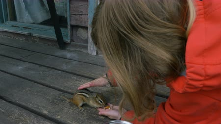 Онтарио : A chipmunk eats from a girls hand. Close up. Low angle.