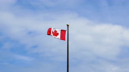 эмблема : The Canadian flag stands tall a top a mast flapping wildly in the strong wind. Birds fly above. The sky is cloudy and blue.