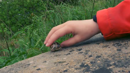 salyangoz : A childs hand gently touches a snail on a rock. Close up. Stok Video