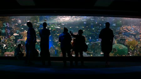 více barevné : Toronto, Ontario. May 2017. People standing in front of a giant aquarium with schools of colorful fish swimming by. Aquariums today can hold millions of liters of water and house giant species such as sharks and whales.