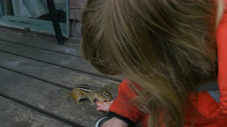 roedor : A chipmunk eats from a girls hand. Close up. Low angle.