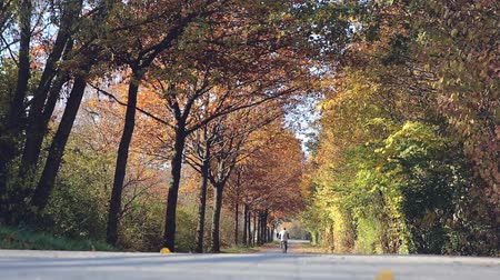 worms eye view : Brightly colored autumnal trees form a vault over a park road as a person on a bicycle rides by.