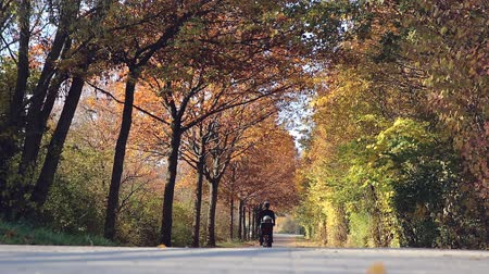worms eye view : Brightly colored autumnal trees form a vault over a park road as a woman on a bicycle rides by with her daughter in a backseat basket behind her. Stock Footage