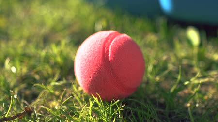 worms eye view : A brightly colored pink foam ball on vibrant green grass. Shallow depth. Close up.