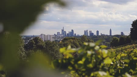 manmade : Frankfurts cityscape behind bright green vine leaves. A summer sky with fluffy white clouds drifting above. Stock Footage
