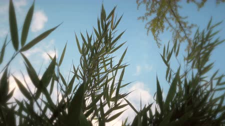 worms eye view : Blades of grass and fluttering in a breeze with a sunny sky above. Low angle. Close up.